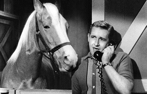 theme song mr ed mr ed galloping onto the big screen thanks to fox 2000