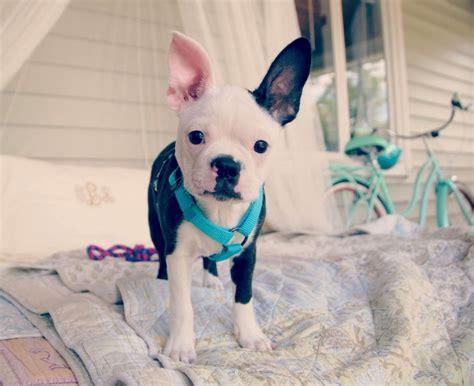 how to potty a deaf potty deaf dogs rock