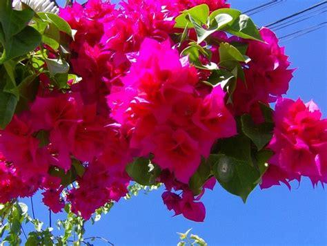 simboli fiori il giardino delle esperidi fiori profumi e simboli dell