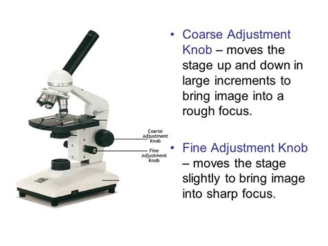 Function Of Coarse Adjustment Knob In Microscope by Microscope Parts Function Ppt