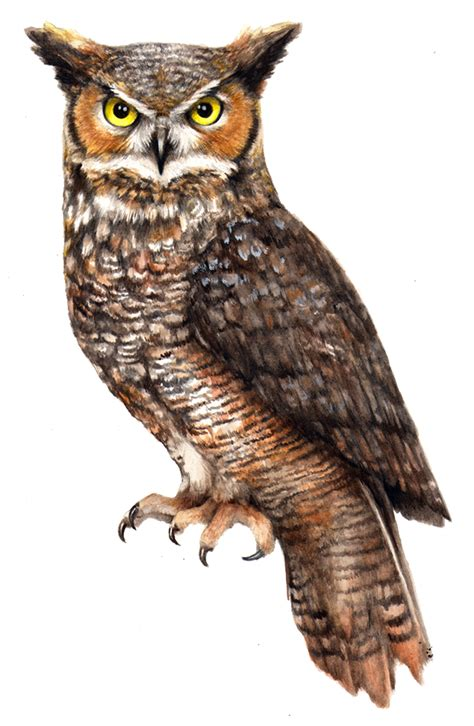 owl tattoo png owl png file png mart