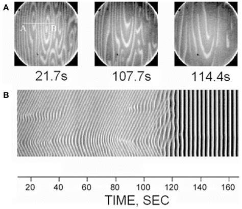 pattern formation on platinum frontiers non linear pattern formation in bone growth