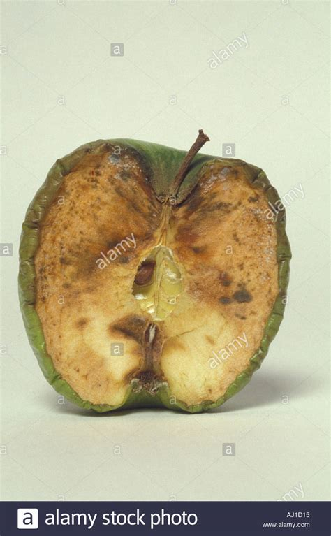 cross section of an apple cross section of decomposing apple stock photo royalty