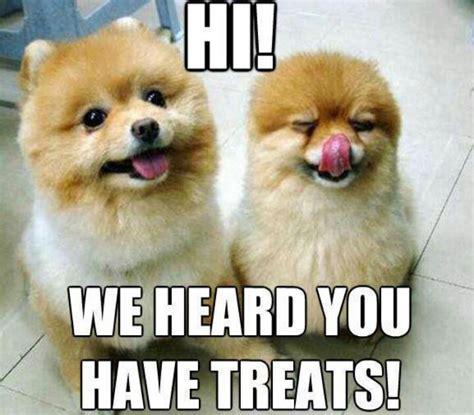 Pomeranian Meme - pomeranian memes pinterest the o jays words and pets