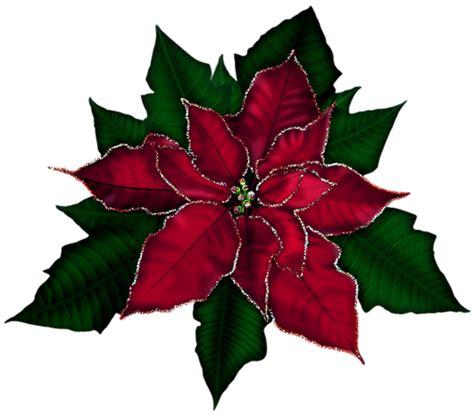 imagenes de navidad flores gifs y fondos pazenlatormenta im 193 genes de flores de navidad