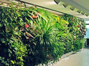 Contoh Dan Lu Taman 30 jenis tanaman hias untuk taman dinding vertikal beserta
