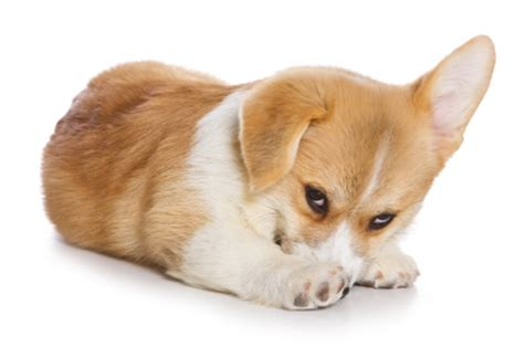 puppy bad breath what do you do about dogs bad breath pet hooligans