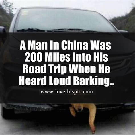 loud barking a in china was 200 into his road trip when he heard loud barking