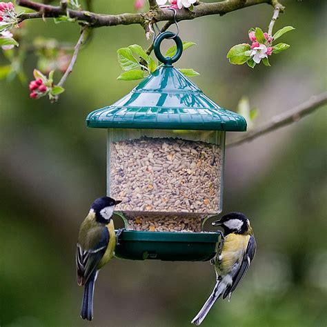 bird  wildlife care aylett nurseries visit ayletts