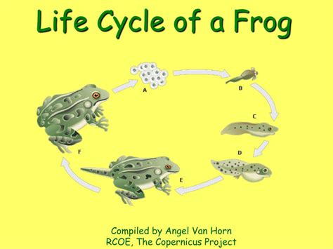 cycle of a ppt cycle of a frog powerpoint presentation id 221081