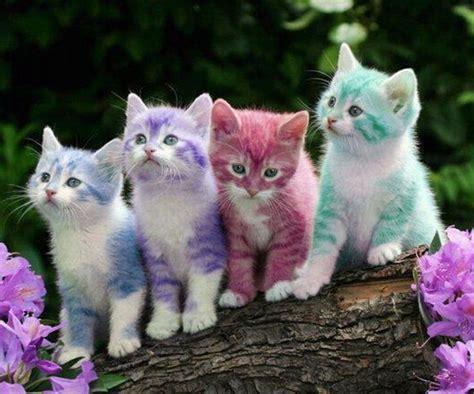 cat easter wallpaper easter kitties love kitty cats pinterest kittens