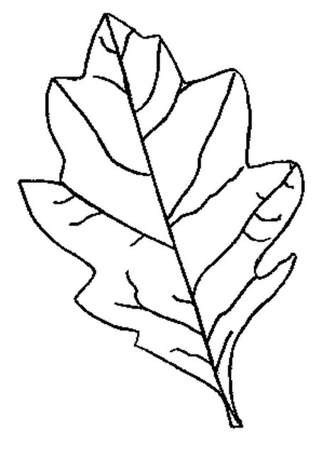printable traceable leaves leaf pattern to trace az coloring pages