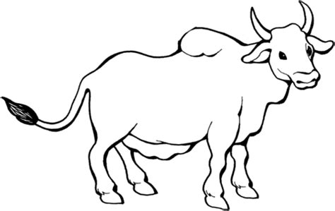 Zebu Coloring Page Supercoloring Com Bull Coloring Pages