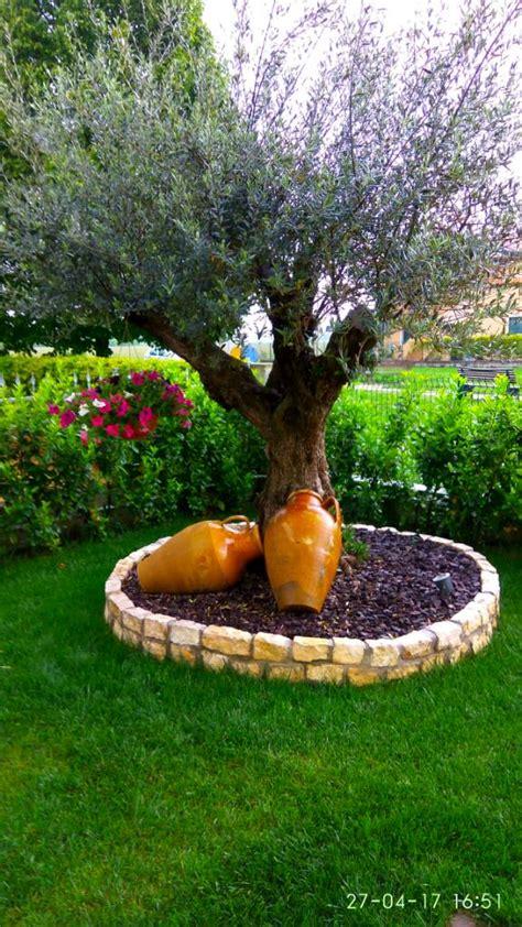 giardino con ulivo consiglio fiori per aiuola ulivo e giardino forum di
