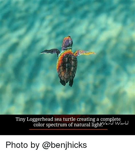 turtle meme turtle memes www pixshark images galleries