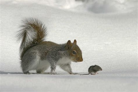 mouse and squirrel 0529s