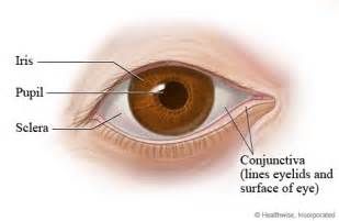 what is the colored part of the eye eye structures front and side views
