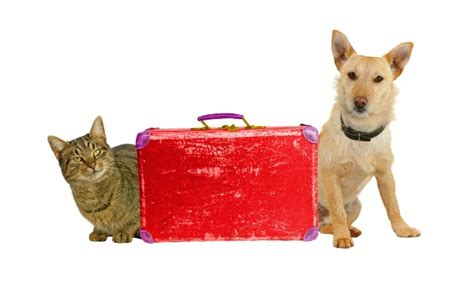 flying with dogs flying with dogs and cats by airline edreams travel