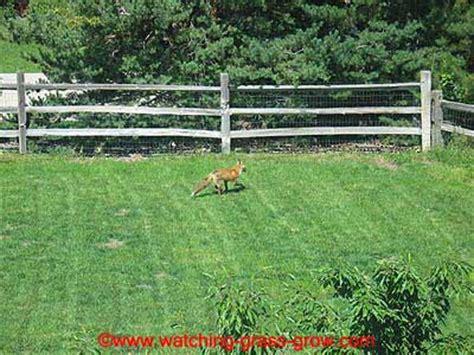 how to grow grass in backyard backyard grass growing