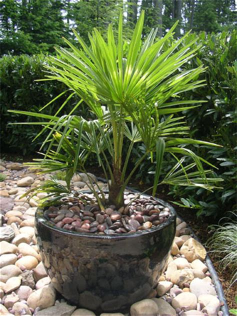 landscape design idea gallery of plants