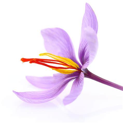 fiore pistillo fiore pistillo metelis