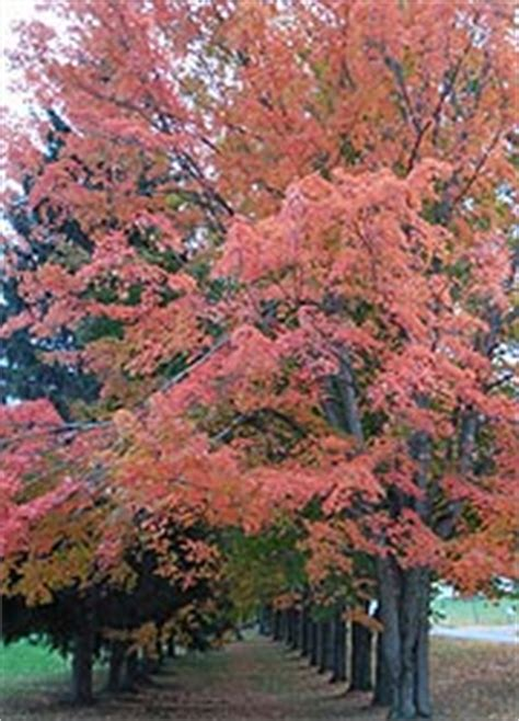 trees maryland maryland trees