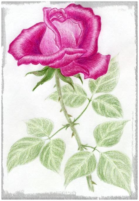 imagenes de rosas dibujos imagenes de dibujos a lapiz de rosas dibujos de amor a lapiz