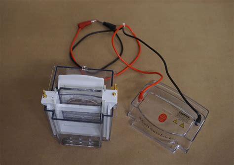 Mini 1 Cell invitrogen novex mini cell electrophoresis gel box phd assets