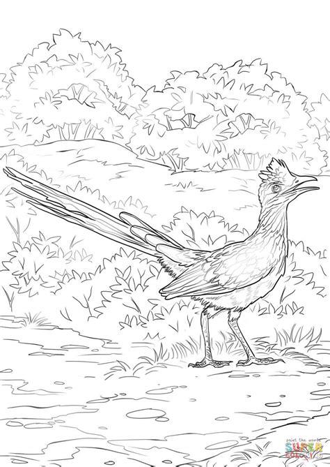 roadrunner bird coloring page lesser roadrunner coloring page free printable coloring