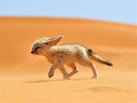 fotos animales bebes tiernos fotos de tiernos animales beb 233 s de distintas especies
