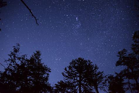 wallpaper bintang malam free photo sky star trees light night free image on