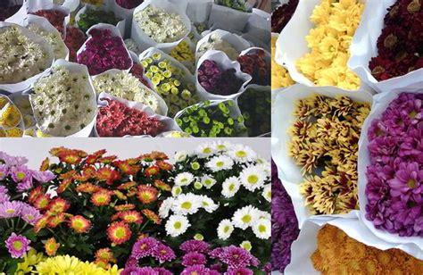 Pupuk Untuk Bunga Seruni 10 tips cara pengawetan bunga krisan agar tetap segar