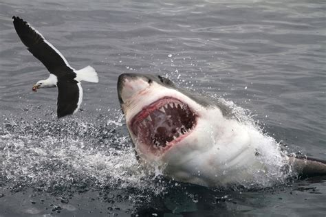 vicious attacks 7 brazil 10 most dangerous places for shark attacks howstuffworks