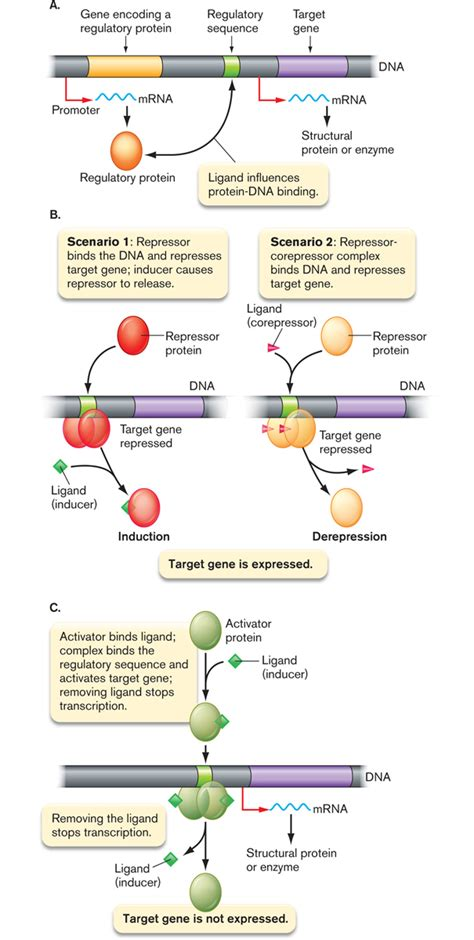 integrated regulatory circuit an integrated transcriptional regulatory circuit that reinforces the breast cancer stem cell