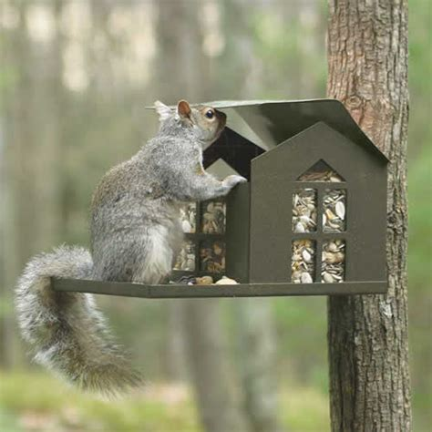 Squirrels Feeders duncraft metal squirrel feeder