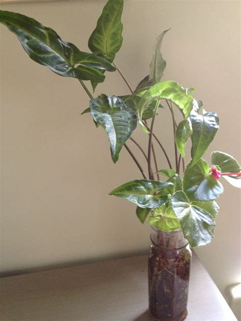 plants that grow in low light 100 house plants for low light how to repot