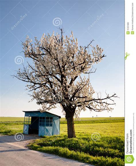 cherry tree stop q desolate stop stock photo image of grass path asphalt 31201980
