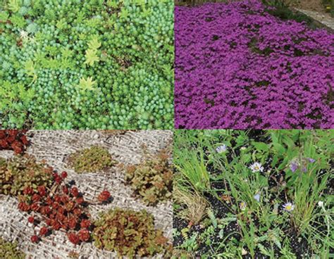 rooftop plants green roof plants go for change profitable green business