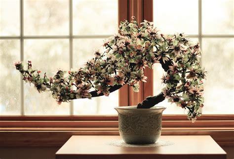 bonsai da interni come coltivare un bonsai e imparare l arte ibonsai