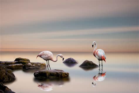 flamingo wallpaper walls flamingo 5k retina ultra hd wallpaper and background image