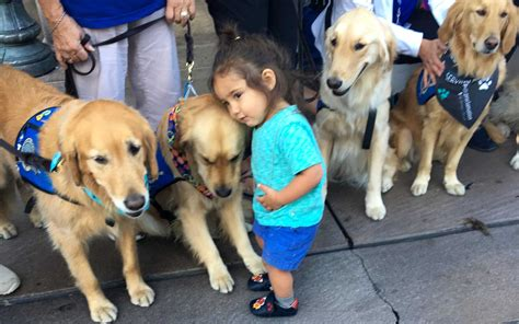 lcc comfort dogs these amazing dogs are comforting las vegas shooting