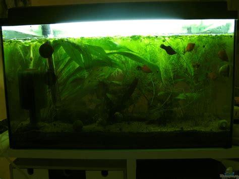 aquarium ideen aquarium ideen large size of aquarium wohnzimmer mit
