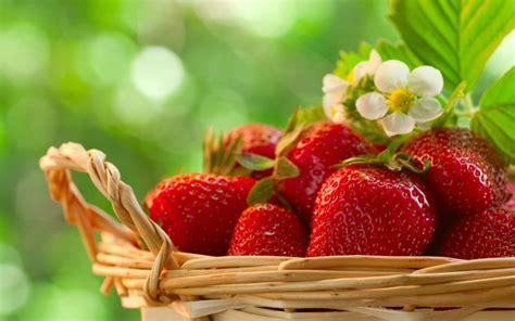piantare le fragole in vaso quando piantare le fragole nel frutteto periodo per