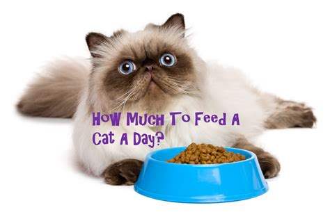 how much to feed a how much to feed a cat a day purrfect cat diet