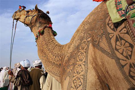 tattoo maker in bikaner in india camels get designer tattoos designtaxi com