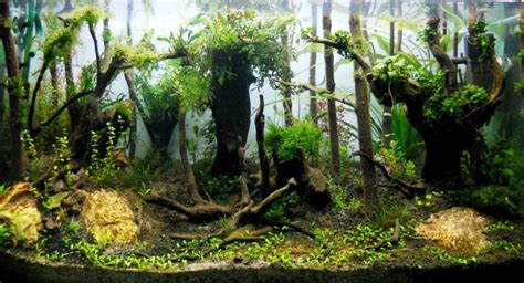 aquascape forest style aquascape menarik bergaya hutan jungle style taman air