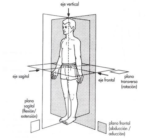 planos en linea lineas y planos cuerpo bizarra