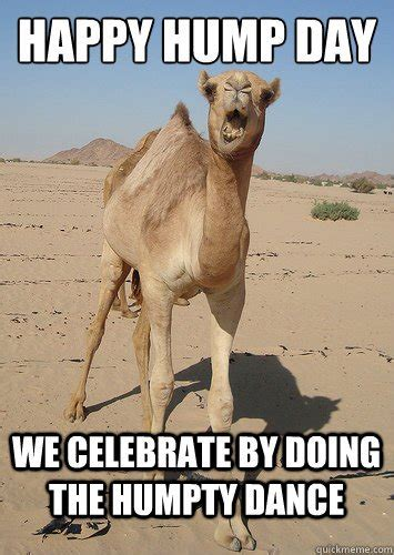 Hump Day Meme Dirty - hump day meme dirty happy hump day we celebrate by doing