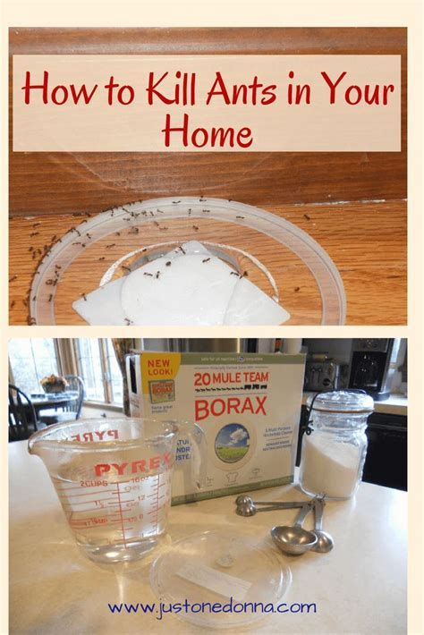 ant killer for kitchen 25 best ideas about borax to kill ants on