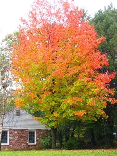 accuweather com photo gallery beautiful orange maple image